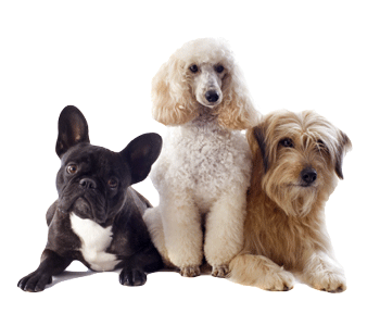 Dog Grooming at Salon Paws located in New Prague, MN 56071