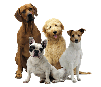 Professional Dog Groomers in New Prague, MN 56071
