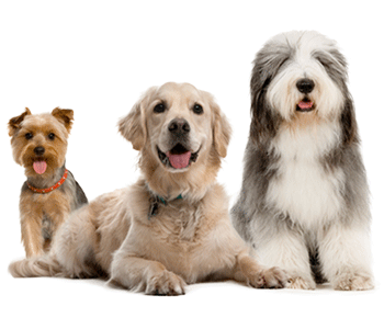 Dog Groomer, Dog Bather, De-shedder Professional Dog Grooming in New Prague, MN 56071