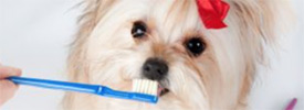 Specialty Dog Grooming Services available at Salon Paws Dog Grooming Shop in New Prague, MN include Nail Trimming, Nail Polishing, Teeth Brushing and More.